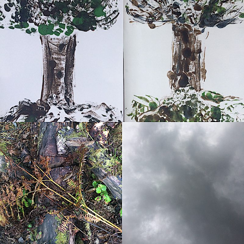 collage of four nature images